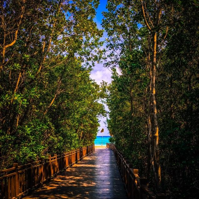 Bridge to the beach!
